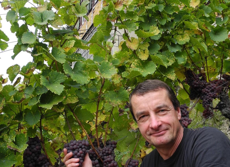 Weinbau Bähler