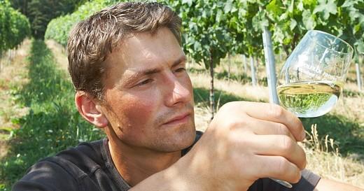 Weinbau Im Gleistal