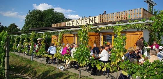 Weinbau Lindicke