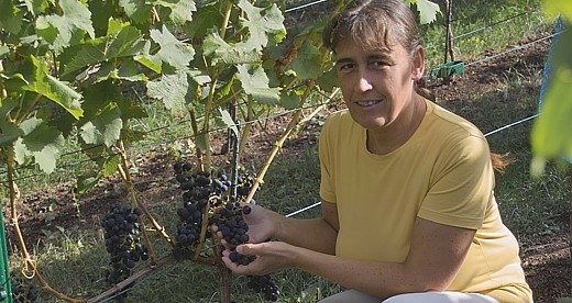 Weingut Kirsch