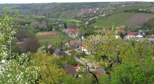 We invite you to a short trip to the idyllic wine region Saale-Unstrut.