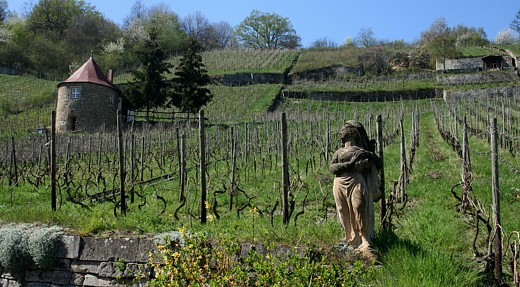 Who moves from one place to another in the wine-growing area Saale-Unstrut travels through a wonderful landscape.