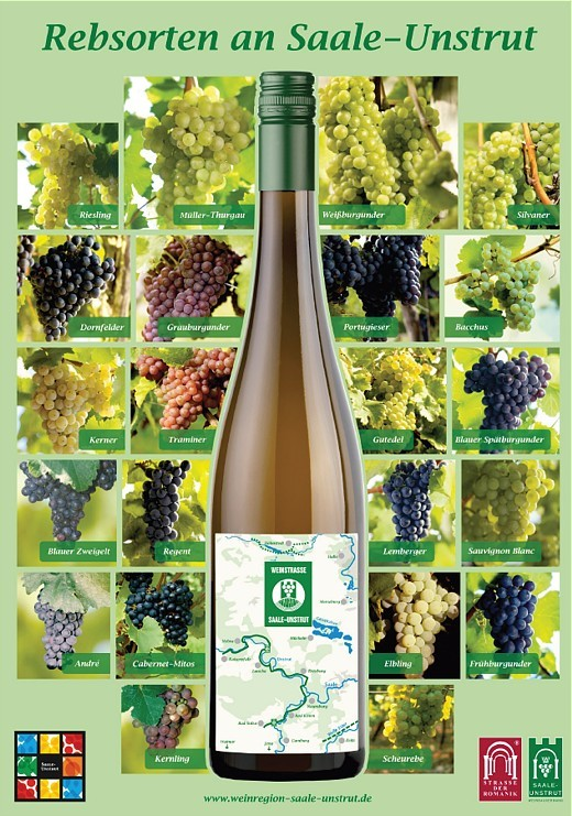 In the most northern quality wine-growing area in Germany you can find more than 50 different types of grapes.